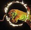 Цирки в Кстово