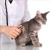 Ветеринарные клиники в Кстово